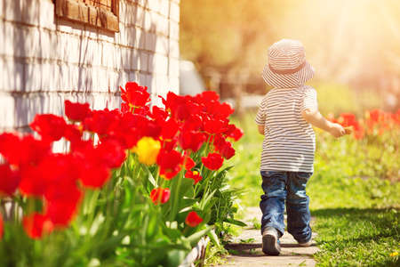 Little child walking near tulips on the flower bed in beautiful spring day Reklamní fotografie - 96627822
