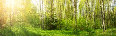 松林パノラマ