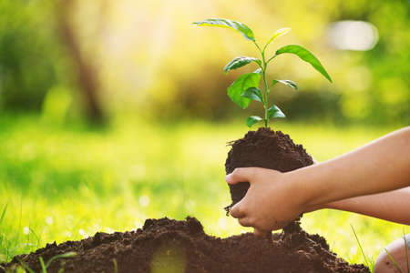Hand of a child with shovel taking care of a seedling in the soil