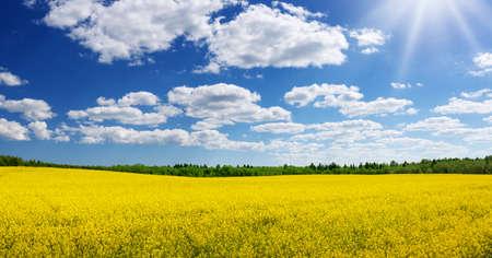 Rapeseed field panorama with beautiul sky