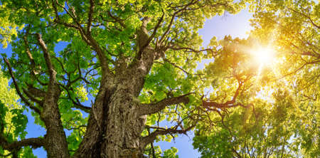 Tree foliage in morning light
