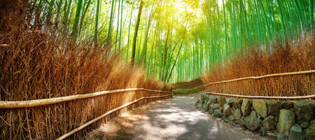 Path in bamboo forest in Kyoto, Japan Stockfoto