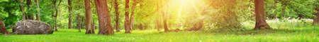 木々と緑の葉を持つ公園のパノラマ 写真素材