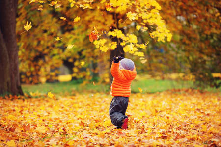 Child standing in park in beautiful autumnal day. Boy playing outdoors yellow maple leaves falling down