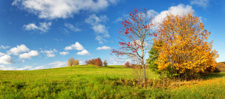 trees on the field in autumn on beautiful sunny day 写真素材