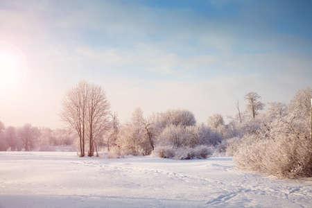 Beautiful trees in winter landscape in early morning Standard-Bild - 108962015