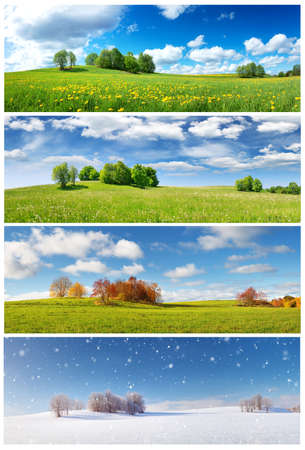 Beautiful trees in four seasons landscape on the field Banque d'images