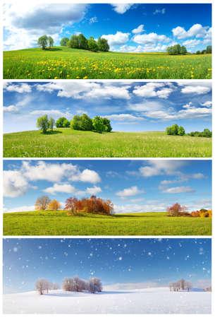 Bellissimi alberi in quattro stagioni paesaggio sul campo