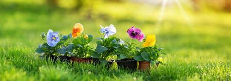 flower and vegetable seedlings growing in the garden