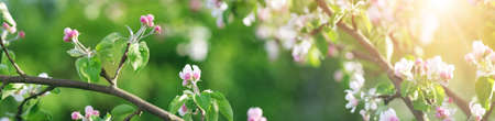 blurred apple tree background