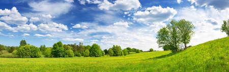 Feld mit Löwenzahn und blauem Himmel Standard-Bild