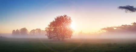 Fogliame dell'albero nella luce del mattino