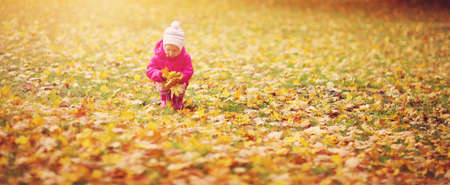 Child standing in park in beautiful autumnal day. Girl collecting yellow maple leaves falling down Stok Fotoğraf