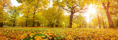 trees with multicolored leaves on the grass in the park