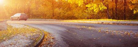 asphalt road with beautiful trees Reklamní fotografie