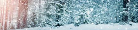 Schöner Baum in der Winterlandschaft am späten Abend