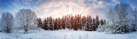 Pini nel paesaggio invernale al tramonto