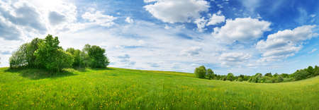 Green field with white and yellow dandelions outdoors in nature in summer. Meadow with beautiful flowers in spring. Fluffy clouds on blue sky and floral background