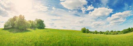 Champ vert avec des pissenlits blancs et jaunes à l'extérieur dans la nature en été. Prairie avec de belles fleurs au printemps. Nuages duveteux sur ciel bleu et fond floral
