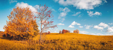trees with multicolored leaves on the field Stok Fotoğraf