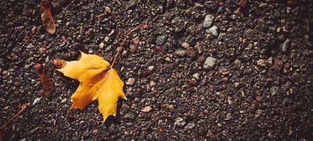 yellow maple leaf in autumn on wet black asphalt road
