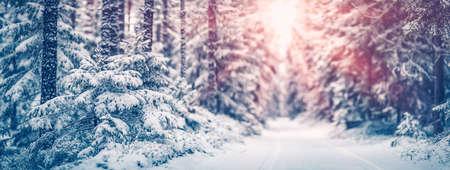 Narrow path in the fairy snowy forest Stok Fotoğraf