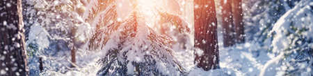 Beautiful trees covered with snow on frosty day in snowfalls. Charming winter panorama. Stok Fotoğraf