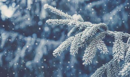 Beautiful tree in winter landscape in late evening in snowfall Stok Fotoğraf