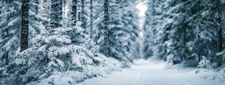 Narrow path in the fairy snowy forest. Beautiful trees are in snowfall on a sunny day. Fluffy snow is lying on fragile spruce branches.