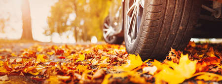 Car on asphalt road on autumn day at park. Colored leaves are lying under the wheels of the vehicle.