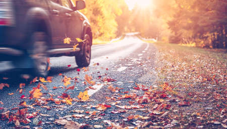 Asphalt road with beautiful trees on the sides in autumn Banque d'images