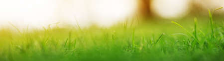 Close-up panoramic view of the green grass in the park