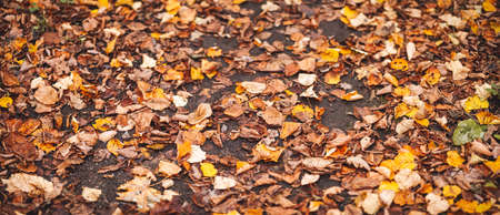 Close-up view of the autumnal leaves on the ground Banque d'images