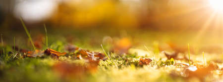Colorful autumnal leaves on the lawn with still green grass