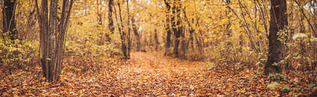 Mystery track in the natural park in autumn.