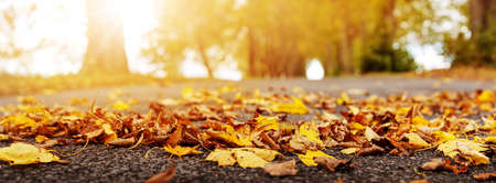 Colorful autumnal leaves on the road in the park Banque d'images