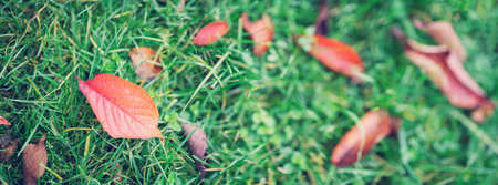 Autumnal leaves on the grass in the park