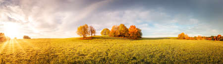 Panoramic view of the autumnal field on the sunny morning.