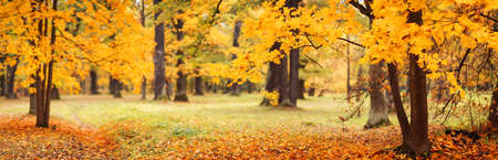 Beautiful view of the colourful trees in the autumnal park.