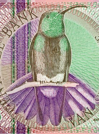 gulden: Black throated mango on 10 gulden banknote from Suriname Stock Photo