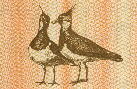 unc: Pair of eurasian lapwings on 1 talonas banknote from Lithuania