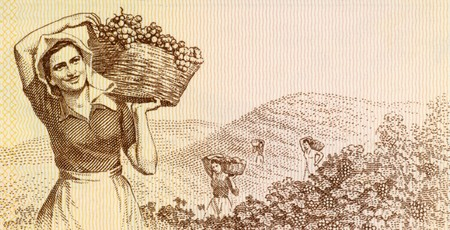 Woman harvesting grapes on 3 leke 1976 banknote from Albania