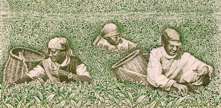 unc: Farmers picking tea on 500 francs banknote from Rwanda