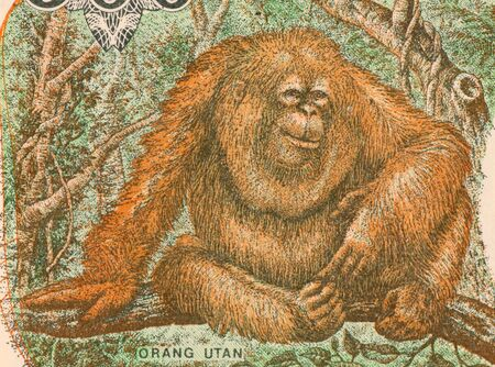 unc: Orangutan on 500 Rupiah 1993 Banknote from Indonesia Stock Photo