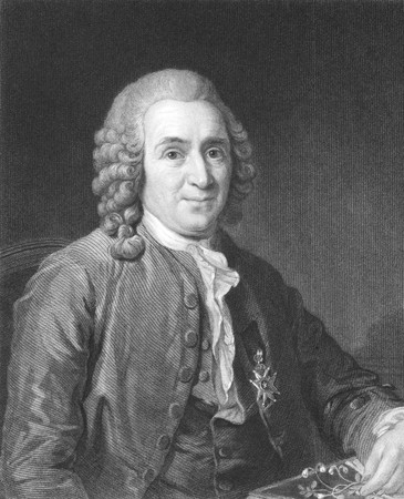 Carl Linnaeus (1707-1778) on engraving from the 1800s. Swedish botanist, physician, and zoologist, known as the Father of modern taxonomy, and also considered as one of the fathers of modern ecology. Engraved by C.E.Wagstaff and published in London by Cha
