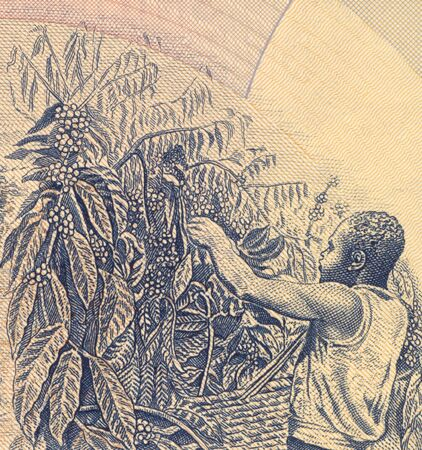 unc: Coffee Harvesting on 500 Shillings 1983 Banknote from Uganda.