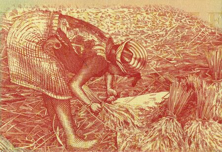 rupiah: Woman Harvesting Rice on 1000 Rupiah 1987 Banknote from Indonesia. Stock Photo