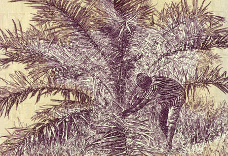 unc: Palm Nut Harvesting on 50 Dollars 2009 Banknote from Liberia. Stock Photo