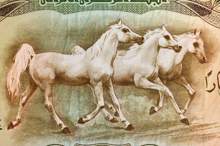 banknote uncirculated: Arabian Horses on 25 Dinars 1978 Banknote from Iraq. Stock Photo