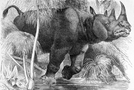 Black Rhinoceros on engraving from 1890. Engraved by unknown artist and published in Meyers Konversations-Lexikon, Germany,1890. photo
